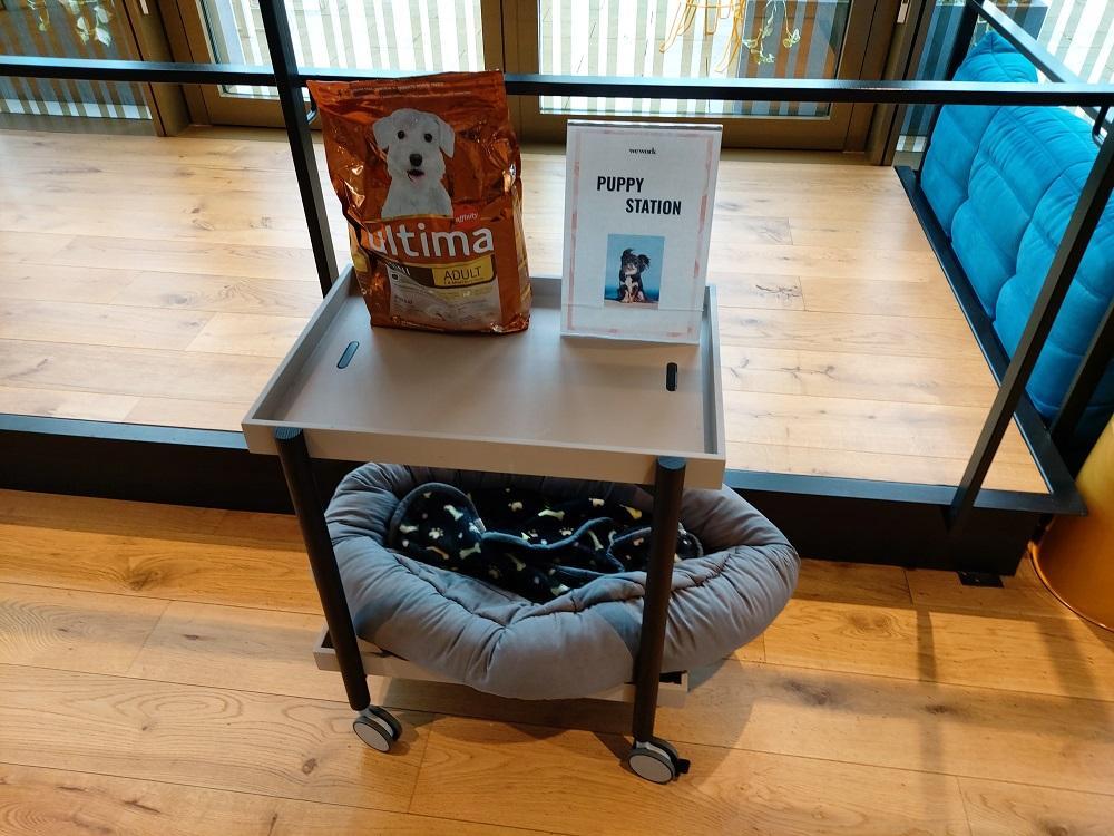 WeWork Barcelona Puppy Station